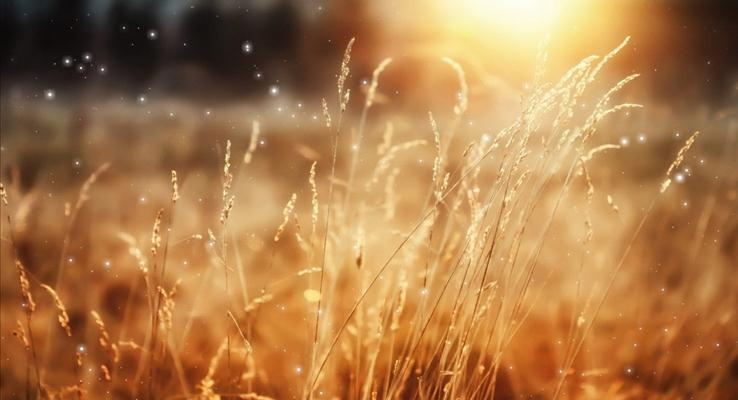 IOS朦胧风格枯黄的野草PPT背景图片