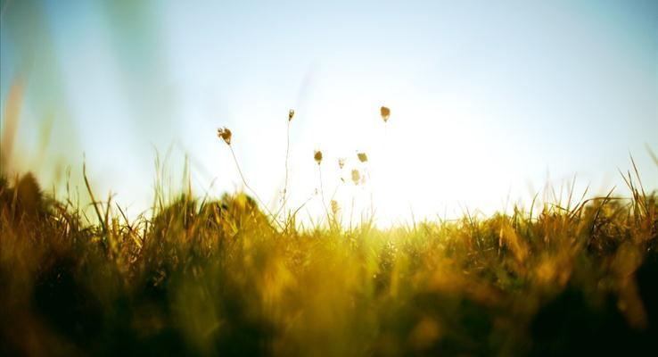 初秋的早晨阳光照射在黄绿的草地上PPT背景图片