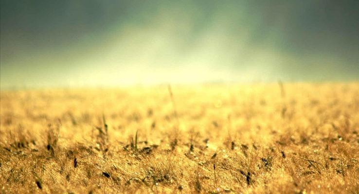 秋收的麦田与希望还有朦胧的远方PPT背景图片