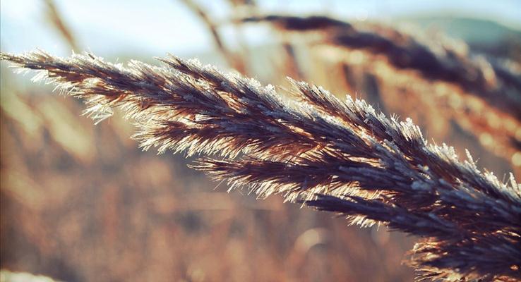 深秋的狗尾草在阳光的照射下PPT背景图片